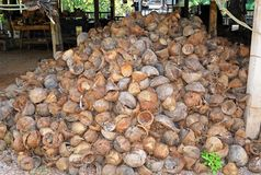 Cocos-farm at Thailand Stock Photos