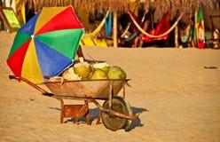 Cocos frescos para la venta en la playa mexicana Imagenes de archivo