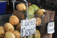 Cocos Royalty Free Stock Photo