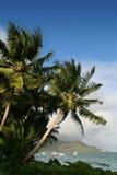 cocos gömma i handflatan Royaltyfri Fotografi