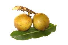 Cocos isolados no fundo branco Fotos de Stock Royalty Free