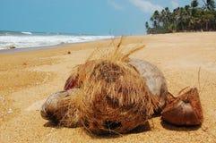 Cocos na praia Imagem de Stock
