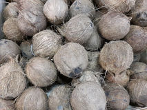 Cocos nucifera. The origins of coconut palm are controversial, there is evidence that it arose in Asia, Oceania or Africa Royalty Free Stock Image