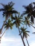 Cocos onder de blauwe hemel royalty-vrije stock foto's
