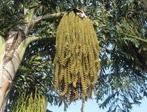 Cocos palmträd och blommor arkivbild