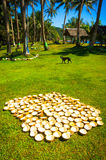 Cocos que se secan en la isla Sun Foto de archivo libre de regalías