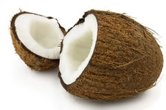 Cocos saporiti Immagine Stock
