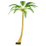 Cocos Tree Royalty Free Stock Images