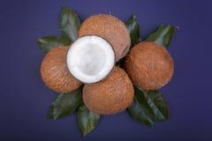 Cocos tropicales con las hojas verdes Nueces orgánicas y nutritivas Cocos enteros, visión superior Frutas del verano Cocos fresco Imagenes de archivo
