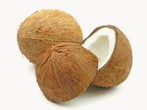 cocos två Royaltyfria Bilder