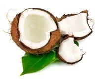 Cocos van de kokosnoot met groen blad stock afbeelding