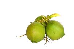 Cocos verdes Fotos de archivo libres de regalías