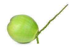 Cocos verdes en blanco Fotos de archivo