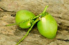 Cocos verdes frescos imagen de archivo