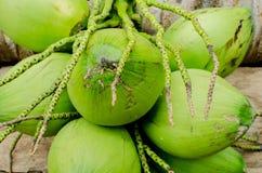 Cocos verdes frescos fotos de archivo