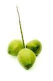 Cocos verdes frescos fotos de archivo libres de regalías