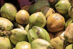 Cocos verdes frescos Imagenes de archivo