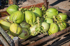 Cocos verdes frescos Imagen de archivo libre de regalías