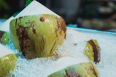 Cocos verdes frescos e doces Fotos de Stock Royalty Free