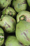 Cocos verdes jovenes Fotografía de archivo libre de regalías