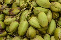 Cocos verdes sin procesar Imágenes de archivo libres de regalías