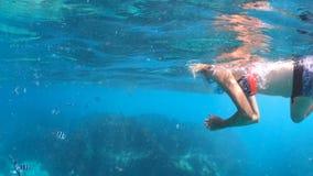 Cocos wyspa snorkeling zbiory