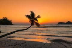 Cocotier au coucher du soleil au-dessus de la plage tropicale en île des Caraïbes de la Jamaïque photos libres de droits