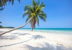cocotier de plage tropical image libre de droits