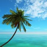 Cocotier et mer de plage de paysage marin Photos stock