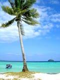 Cocotier sur la plage Photographie stock