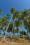 Cocotier vert près de plage photos libres de droits