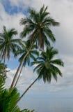 Cocotiers au-dessus de fond de ciel bleu Photos libres de droits