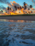 Cocotiers dans le coucher du soleil Image libre de droits