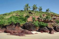 Cocotiers sur la plage. Arambol, Goa photographie stock libre de droits