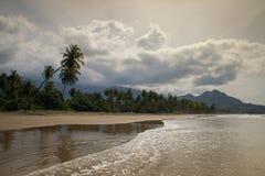 Cocotiers sur le rivage de l'Océan Indien un jour lumineux image libre de droits