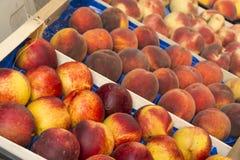 Cocotte en terre de pêche de fruit photographie stock libre de droits