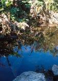 Cocrodile het verbergen in kalme wateren stock afbeelding