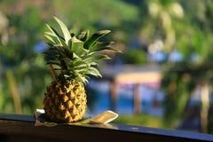 Coctail dell'ananas Fotografia Stock