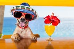 Coctailhund Arkivfoto