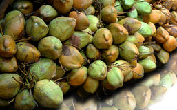 Cocunuts Photo stock