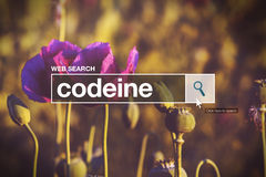 Codéine dans la boîte de recherche de navigateur d'Internet image stock