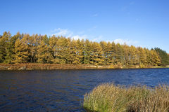 Cod beck autumn Royalty Free Stock Image