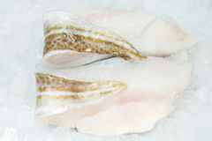 Cod fillets on ice Stock Images