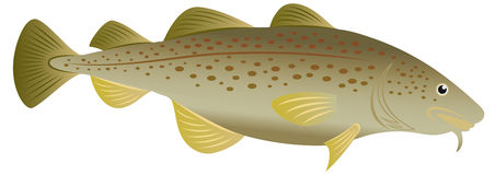 Cod fish. The figure shows a cod fish Stock Photos