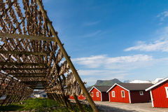Cod fish at the drying racks and rorbu, Lofoten, Stock Photography