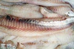 Cod fish filet. Fresh filet raw cod fish background Stock Photography
