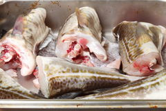Cod fish - fish fillets Royalty Free Stock Image