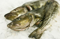 Cod fish food Royalty Free Stock Photo
