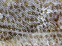Cod fish skin Stock Photo