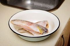 Cod Icefishes Royalty Free Stock Image